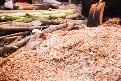 Ground Shredded Chipped Wood chips used as biomass solid fuel, raw material for producing wood pulp, organic mulch in gardening,. Landscaping and substrate for stock photography