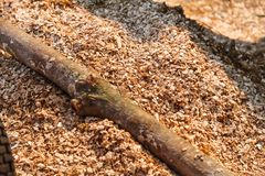 Ground Shredded Chipped Wood chips used as biomass solid fuel, raw material for producing wood pulp, organic mulch in gardening,. Landscaping and substrate for royalty free stock photography