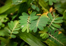 Ground Shrubs: pinnate leaves and grasses. Royalty Free Stock Photography