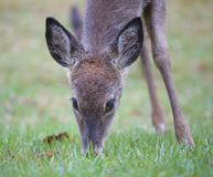 Ground sniffer Royalty Free Stock Photography