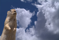 Ground squirrel and cloudscape Stock Image
