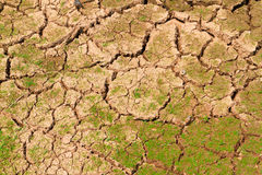 Ground surface to be drying together with grass Royalty Free Stock Images