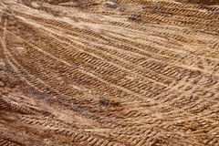 Ground texture Stock Images