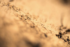 Ground Texture Close Up, Selective Focus and Shallow Depth of Field. Abstract Nature Background. Ground Texture Close Up, Selective Focus and Shallow Depth of Royalty Free Stock Images
