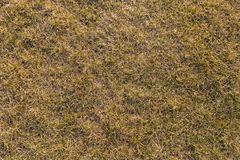 Ground texture with dry grass and small, rare tufts of green plants. stock image