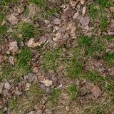 Ground texture with dry grass and small, rare tufts of green plants. Early spring after snow, soil, top view.  stock photo