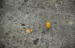 Ground texture with leafs. Seamless concrete ground texture with leafs Royalty Free Stock Images
