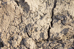Ground texture. Natural background - dry gray cracked ground texture Royalty Free Stock Photography
