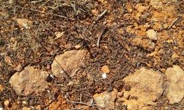 Ground texture Stock Image