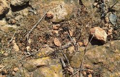 Ground texture with rocks Stock Images