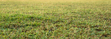 Ground at Thai Loyal from the ground level Royalty Free Stock Photos