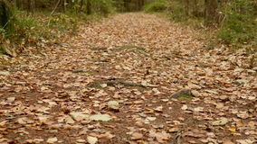 On the Ground of the Trail. Autumn daytime. Smooth dolly shot.  stock footage