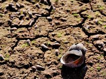The dead body of small living thing in the dry water stock photos