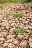 The ground water in the parched Royalty Free Stock Photo