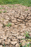 The ground water in the parched Royalty Free Stock Photography