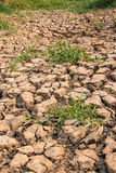 The ground water in the parched Royalty Free Stock Photos