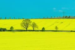 Ground. Yellow ground in Prague, spring Stock Photos