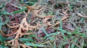 Ground. When you carefully look at ground, you can see how interesting it can be. It is a picture of a grass. There are some leaves of thuja. This picture is royalty free stock photos