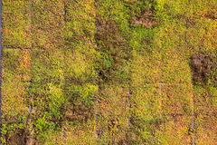 Groundcover Stock Images