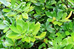 Groundcover. Or ground cover is any plant that grows over an area of ground.  provides protection of the topsoil from erosion and drought royalty free stock photo