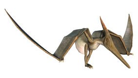 Grounded Pteranodon. 3D digital render of a prehistoric flying reptile Pteranodon isolated on white background Royalty Free Stock Photos