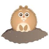日groundhog 免版税图库摄影