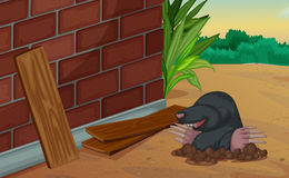 Groundhog coming out of the ground Royalty Free Stock Photography