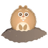 Groundhog Day Royalty Free Stock Photography