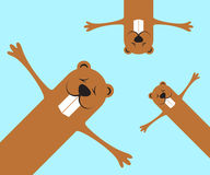 Groundhog day funny marmots background Stock Images
