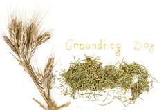 Groundhog Day. Isolated on white. Studio Photo stock images