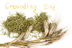 Groundhog Day Stock Images