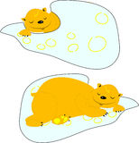 Groundhog de sommeil Image stock