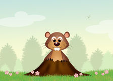 Groundhog in the den. Illustration of Groundhog in the den Stock Photography