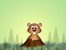 Groundhog in the den. Illustration of marmot for groundhog day Stock Photography