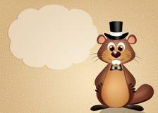 Groundhog Royalty Free Stock Image
