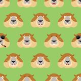 Groundhog head pattern. Woodchuck background. Ornament face Marm Stock Image