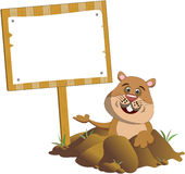Groundhog Popping Out of its Burrow Sign Board. Illustration for Groundhog Day featuring a happy groundhog popping out of its burrow and showing blank wooden Stock Images