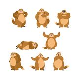 Groundhog set poses and motion. Woodchuck happy and yoga. Marmot. Sleeping and angry. guilty and sad. Groundhog day Vector illustration Stock Photos