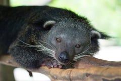 The groundhog stock photos