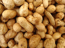 Groundnut, peanut, Arachis hypogaea. Food crop with underground pods containing chocolate brown oval seeds used roasted, as dry fruit and for extraction of Stock Photo