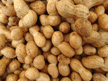 Groundnut, peanut, Arachis hypogaea Royalty Free Stock Photos