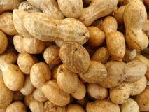 Groundnut, peanut, Arachis hypogaea Royalty Free Stock Photo