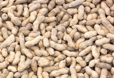 Groundnut Stock Photography