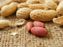 Groundnut Royalty Free Stock Photography