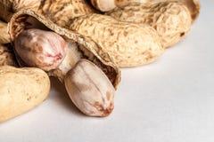 Groundnuts Obraz Stock