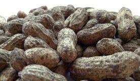 Groundnuts Royalty Free Stock Photos