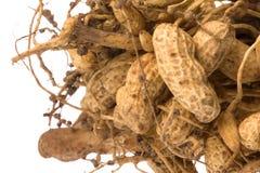 groundnuts isolerade rått Royaltyfria Foton