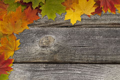 Grounge background with autumn leaves. Royalty Free Stock Photography