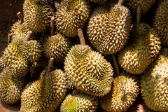 Grounp av durianen Arkivbilder