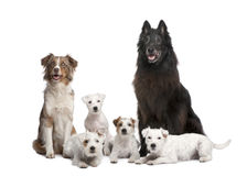 Group of 5 dogs stock photo